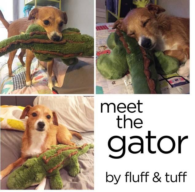 the-gator