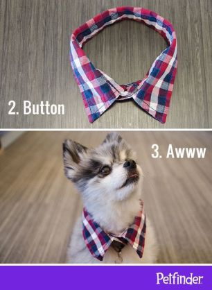 DIY Collar Bottom