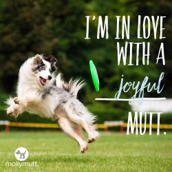 250px-mutt-day-joyful