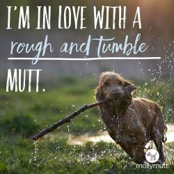 250px-mutt-day-rough-and-tumble