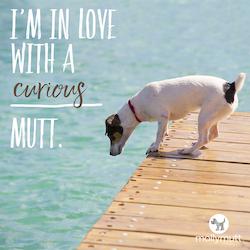mutt-day-curious