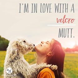 mutt-day-velcro (1)