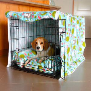 bundyandbaxter_beagles