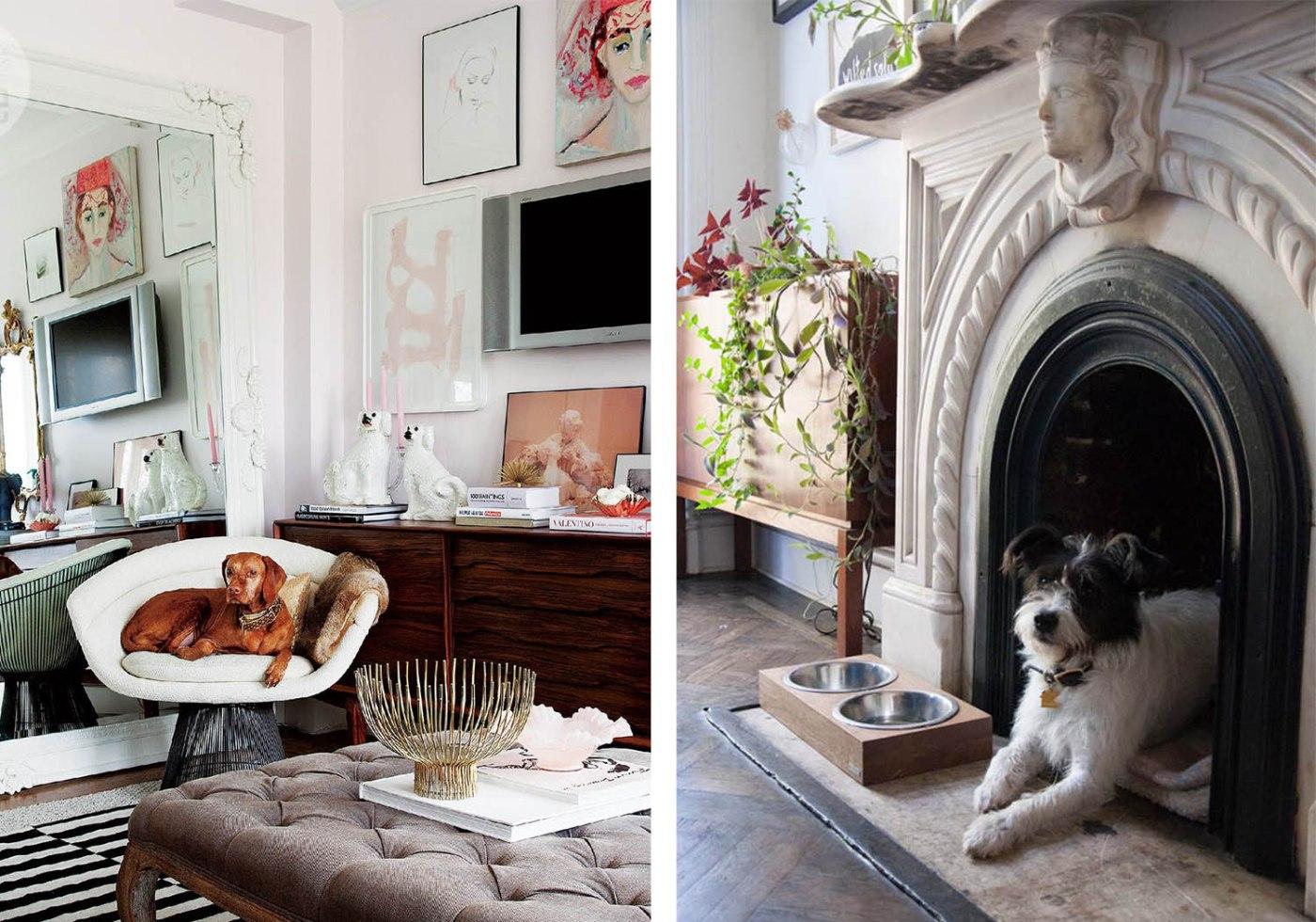 Our Favorite Pet Friendly Doggie Decor Ideas