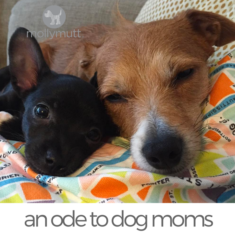 That Mutt Dog Mom Mother S Day